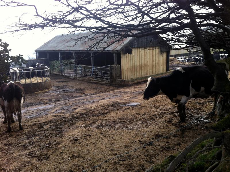 West Prince Farm